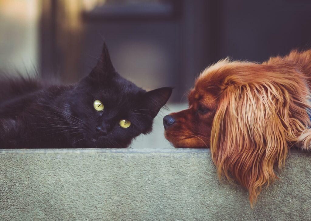 resgate-e-adoção-de-cães
