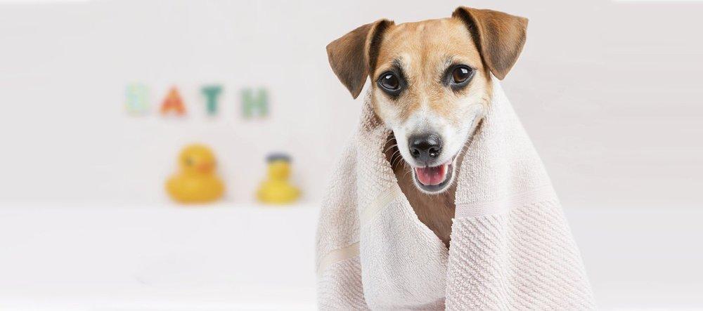 cuidados-com-cães