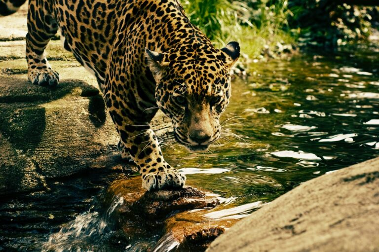 zoológicos-no-brasil
