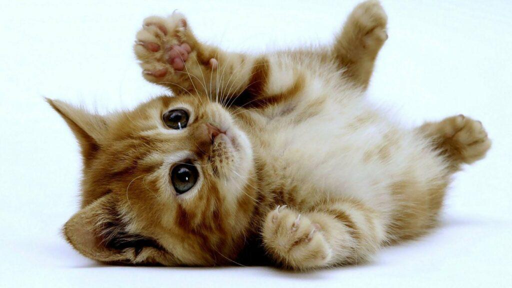 resgate-e-adoção-de-gatos