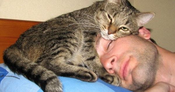 Resgate e Adoção De Gatos